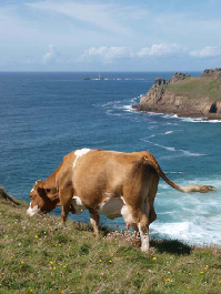 Cornwall Holiday cottages,Meadowside, Borah Farm Cottages, Lamorna, St Buryan, Penzance, Cornwall, England